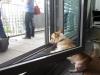 obligatorischer dogcontent: Eddie, tck13foto, NetworkingLine